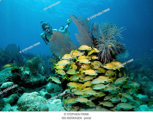 Female snorkeler on coral reef