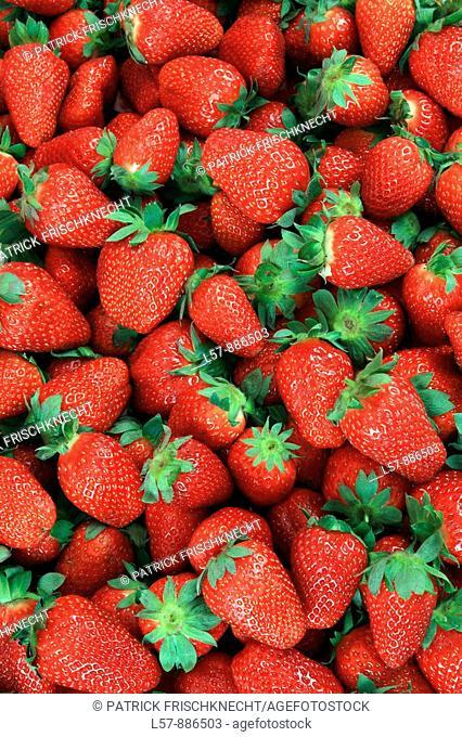 Mass of Strawberry, Fragaria spp, Erdbeere, studio, Oetwil am See, Zuerich, Switzerland