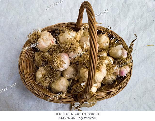 garlic farming in France