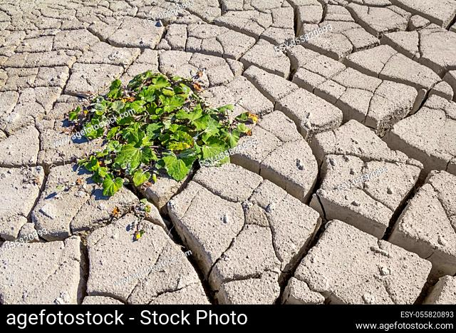 sunny arid scenery including a small plant surrounded by lots of fissured dry ground