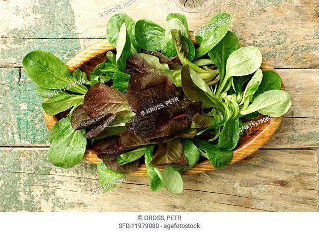 Red and green lamb's lettuce