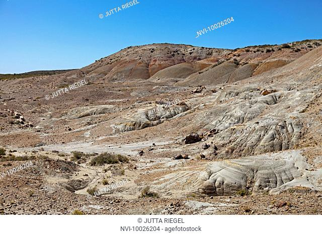 Area of petrified trees at Bahia Bustamante, Province of Chubut, Patagonia, Argentina, South America