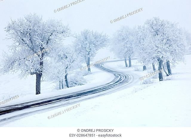 Snowy winter road, trees with snow and fog