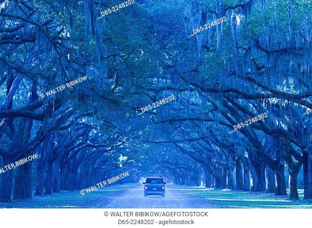 USA, Georgia, Savannah, Wormsloe State Historic Site, Live Oak Avenue, 400 Live Oak trees line the road to the former Wormsloe Plantation