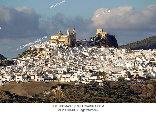 The hilltop White Town of Olvera - with its La Encarnacion church and Moorish castle - surrounded by olive groves Cadiz province, Andalusia, Spain