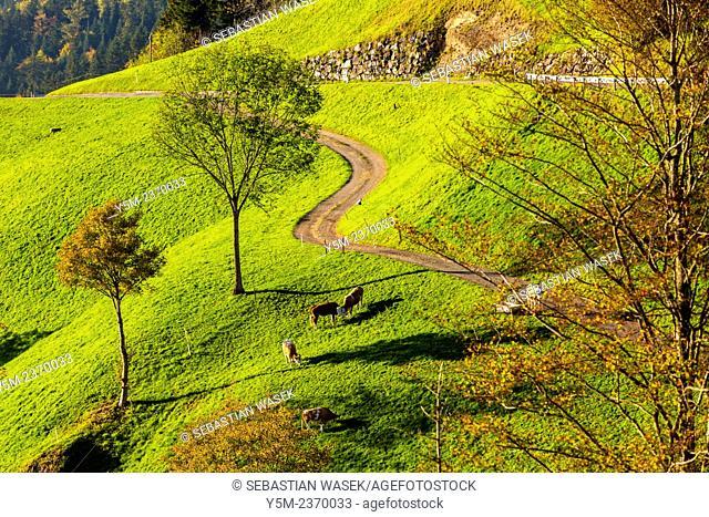 Emmental region near lüderenalp, Kanton Bern, Switzerland