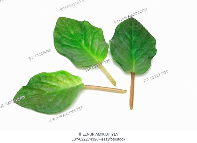 Selection of various green leaves isolated on white