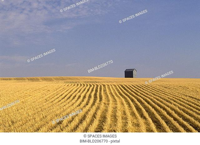 Harvested Wheat Field and Barn