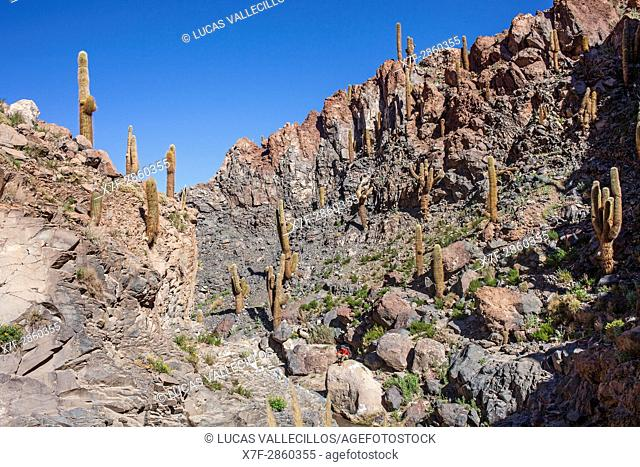 Trekking in Puritama river, Guantin Valley or ravine , near San Pedro de Atacama, Atacama desert. Region de Antofagasta. Chile