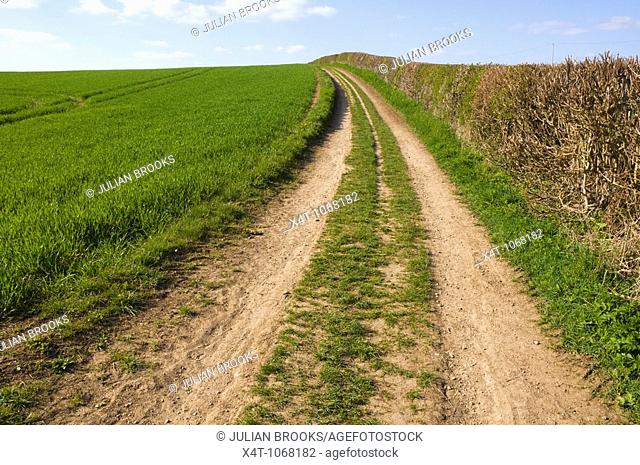 A peaceful track by a field and hedgerow in Oxfordshire UK near the River Cherwell
