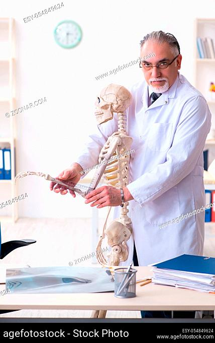 The aged male doctor with skeleton