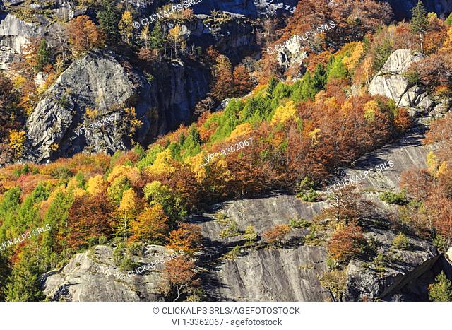 Wood In Val Di Mello Stock Photos And Images Agefotostock