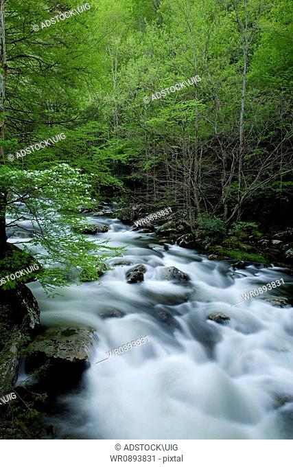 Middle Prong, Little River, Tremont, Great Smoky Mountains National Park, TN