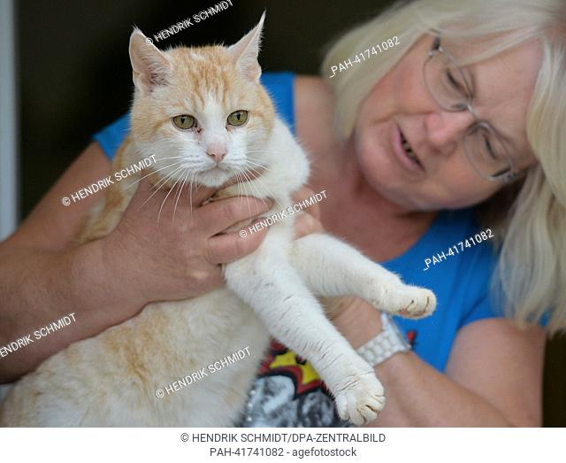 A12-year-old male cat is looked after by Ursula Ucak of the animal protection associaton in Halle (Saale), Germany, 13 August 2013