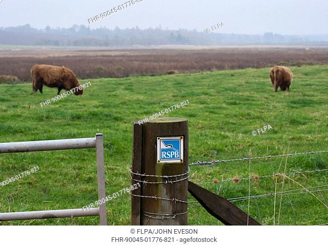RSPB sign on gatepost, with Highland Cattle grazing on pasture in background, Loch of Kinnordy RSPB Nature Reserve, Kingoldrum, Angus, Scotland, november