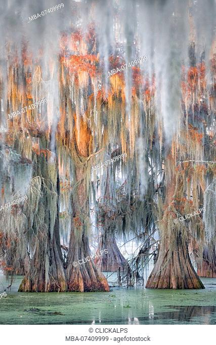 Lake Martin, Breaux Bridge, Atchafalaya Basin, Southern United States, USA, North America