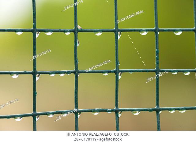 Green lattice with water drops. Almansa, Albacete province, Spain