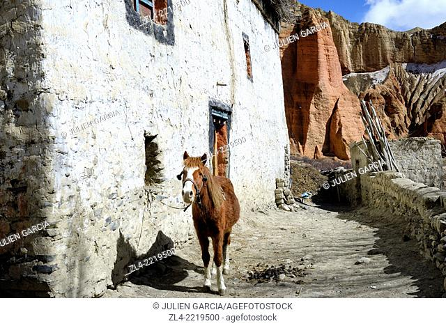 Horse near a house in the village of Dhakmar and red cliff. Nepal, Gandaki, Upper Mustang (near the border with Tibet)