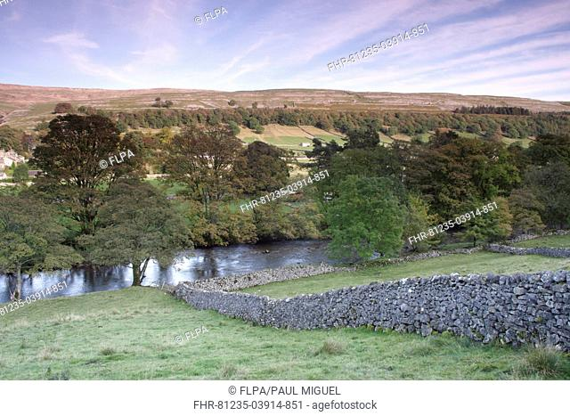 View of drystone walls, river and trees in evening light, River Wharfe, Kettlewell, Wharfedale, Yorkshire Dales N P , North Yorkshire, England, October