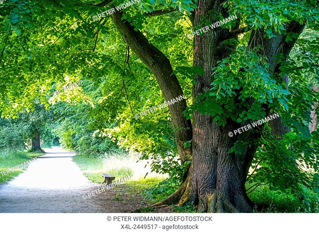 Lime Tilia, landscaped gardens, a UNESCO World Heritage Site, Lednice, district Breclav, South Moravia, Czech Republic