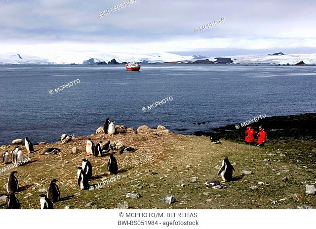 penguins in South-Geogien watched by nature tourists, Antarctica