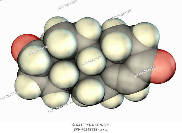 Testosterone hormone, molecular model