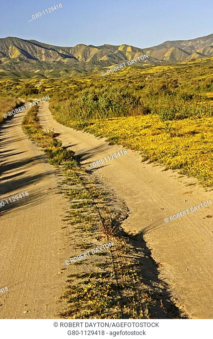 A lonely road bordered by wildflowers
