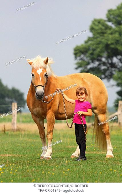 girl with haflinger horse