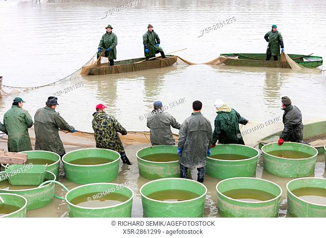 fishermen at harvesting pond, Czech Republic