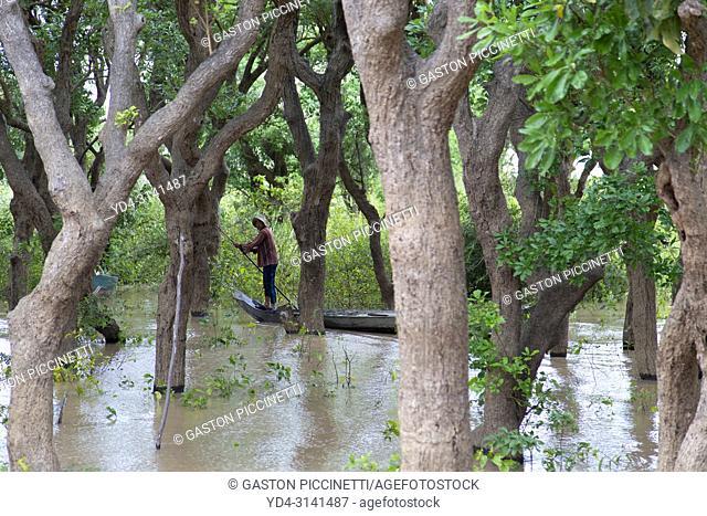 Fisherman between the mangroves, Tonle Sap lake, Siem reap Province, Kingdon of Cambodia. Kompong Phluk, is one of the more than 170 villages surrounding Lake...