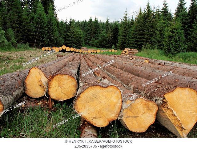 Tree logs in Bieszczady National Park, Poland, Europe