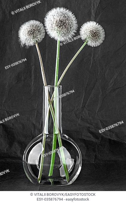 Three dandelion in laboratory flask on black background