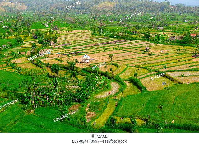 Teraced rice fields stretch from the hills into a valley with stands of banana trees and rest houses for agricultural workers