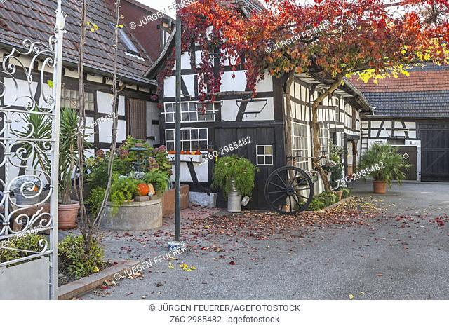 half-timbered farming house and inner court with autumnal vine foliage decoration and autumnal garden in Seebach, small village in Northern Alsace, North Vosges