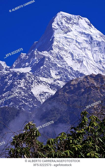 Annapurna South, Annapurna Range, Trek to Annapurna Base Camp, Annapurna Conservation Area, Himalaya, Nepal, Asia