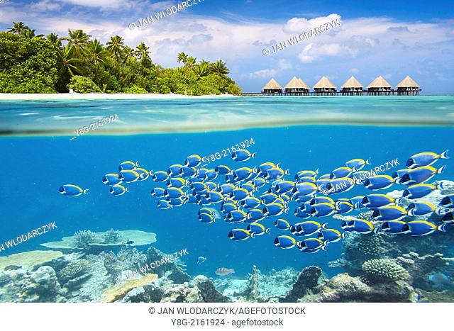 Half underwater view with school of fish, Maldives, Ari Atol, Indian Ocean