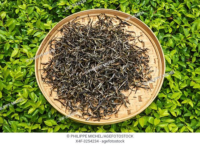 China, Yunnan, Kunming, tea market