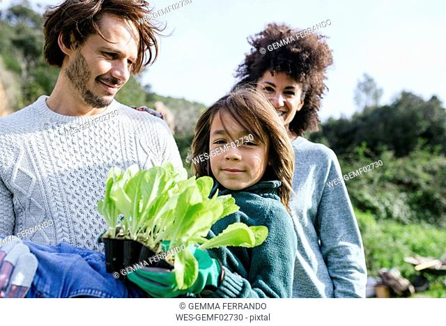 Happy family holding lettuce seedlings in a vegetable garden