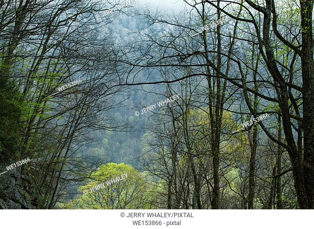 Spring in the Great Smoky Mountains National Park, TN