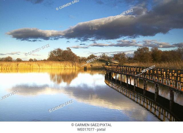 Tablas de Daimiel National Park. Ciudad Real province, Castilla-La Mancha, Spain