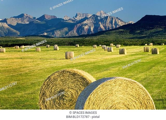 Hay bales in farm field in rural landscape