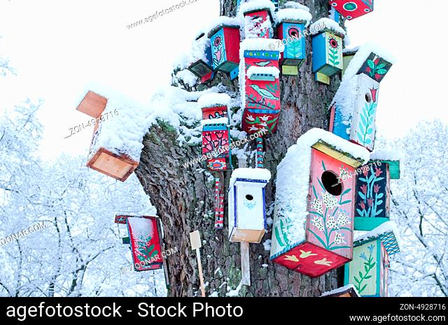 decorative colorful painted bird houses nesting box hang on large old tree trunk covered with snow in winter