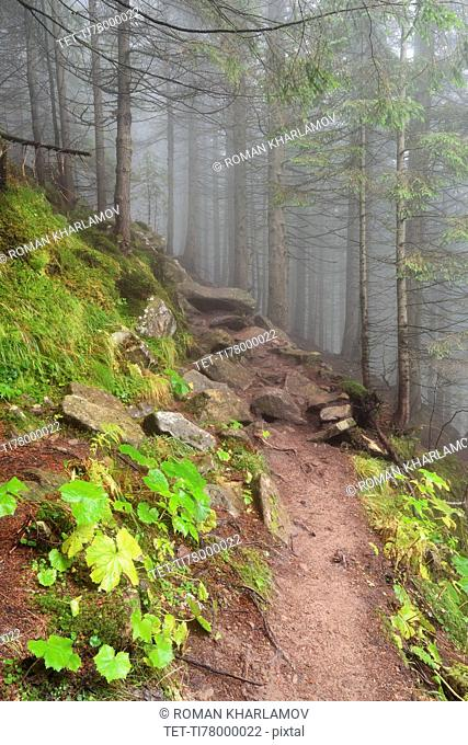 Footpath in forest in fog