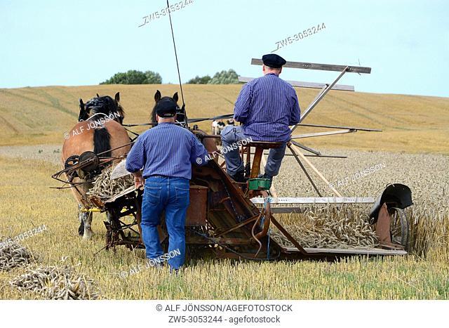 Old times harvesting with horses and selfbinder on Slimminge, Skurup, Scnia; Sweden