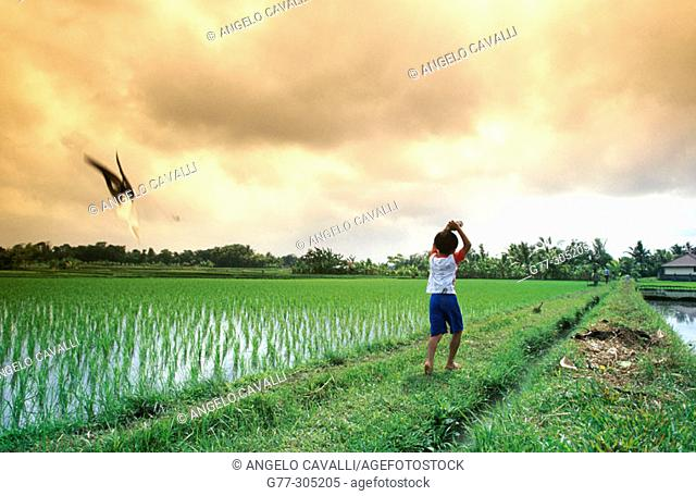 Young boy flying a kit in a rice field. Bali Island, Indonesia