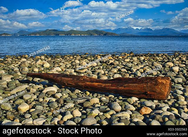 log on gravel beach at Rebecca Spit Provincial Park, Quadra Island, British Columbia, Canada