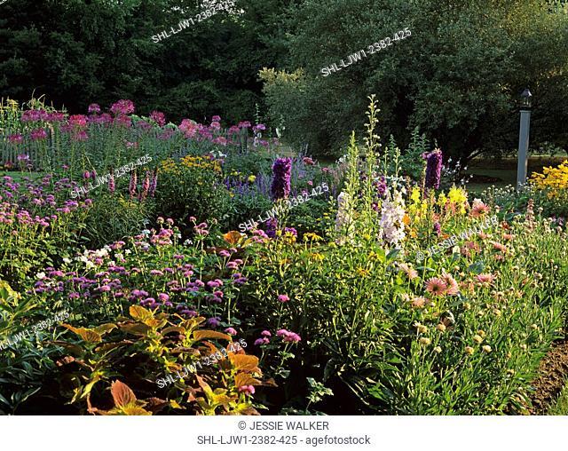 GARDENS: Tall perenials, Hollyhock, delphinium, cleome, medium shot, late afternoon sun