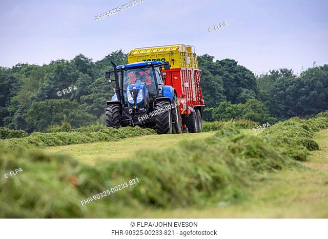 Tractor with forage wagon picking up mowed grass, Grimsargh, Preston, Lancashire, England, July