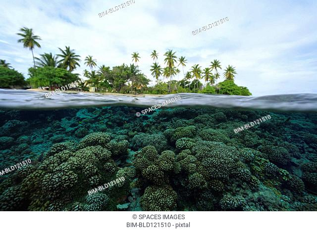 Reef in tropical water, Bora Bora, French Polynesia