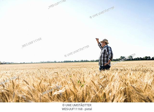 Senior farmer standing in wheat field looking at distance